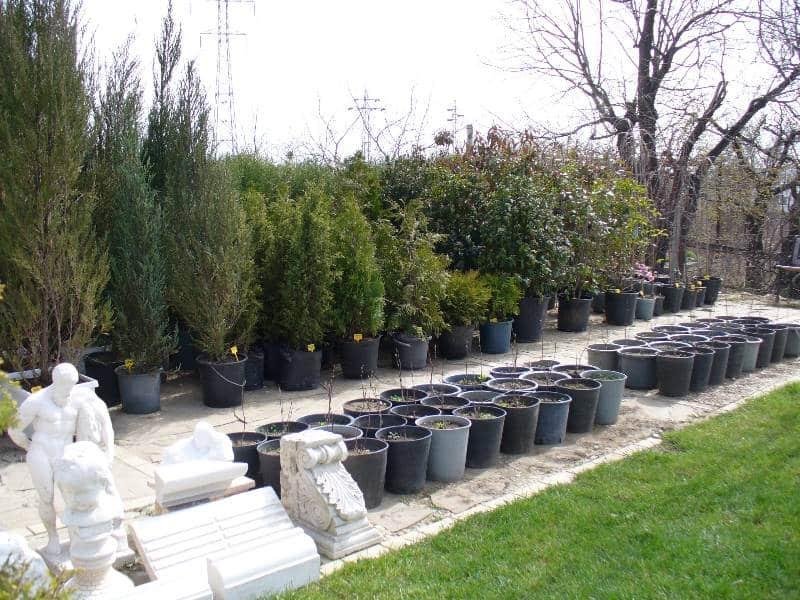 Дръвчета и храсти, които предлагаме заедно с озеленяване